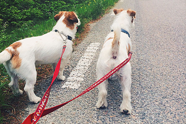 Daily dog walking visits are completely customizable.